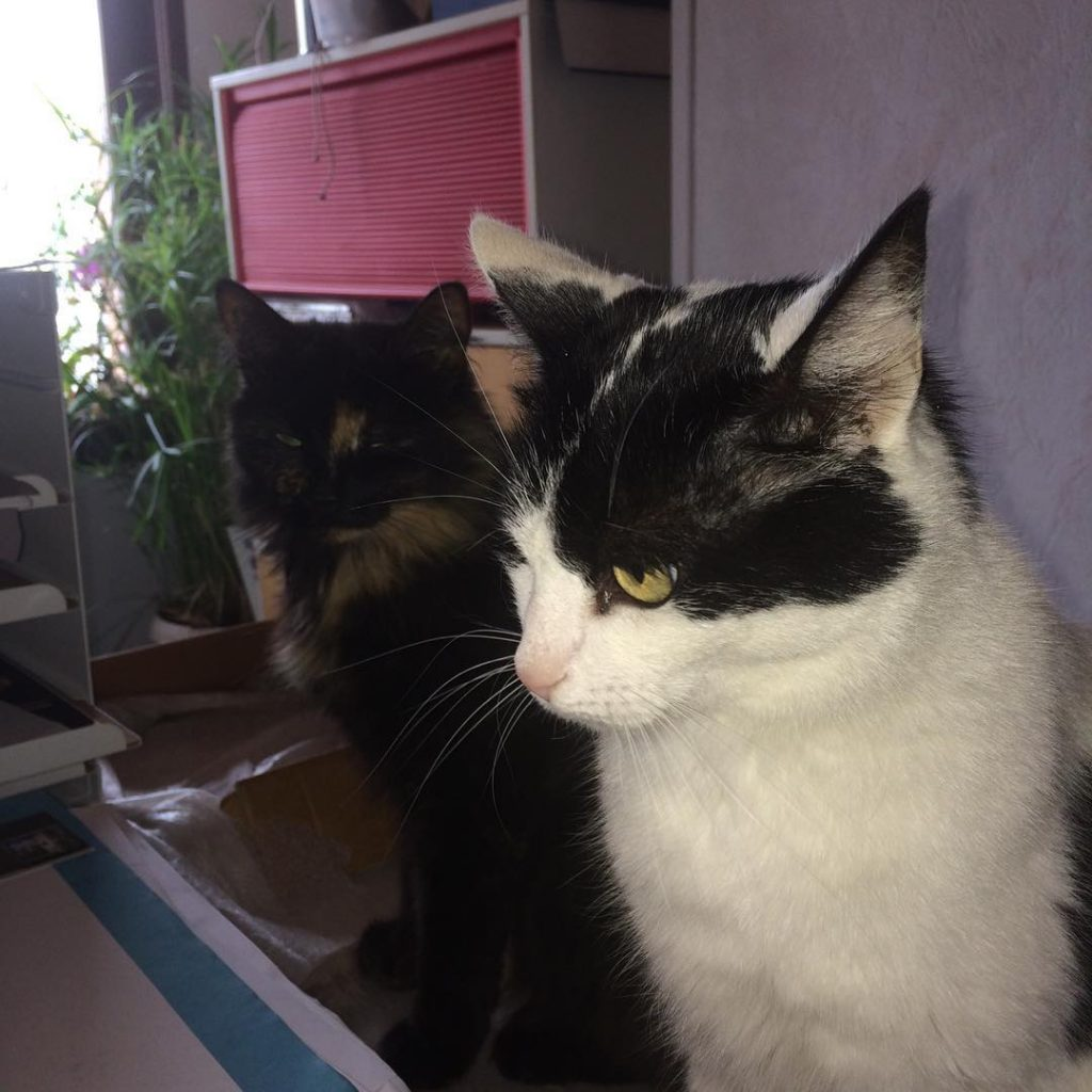 Le duo infernal LeChat LeChaton Cat Catstagram